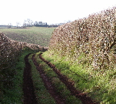 Area-A. Windthorn Lane - showing the present-day unclassified road off Compton Pool Cross.