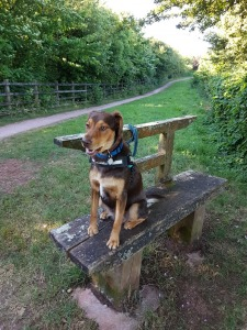 Bench on Footpath 13/old ring road